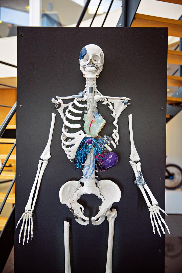 3D-Skelett