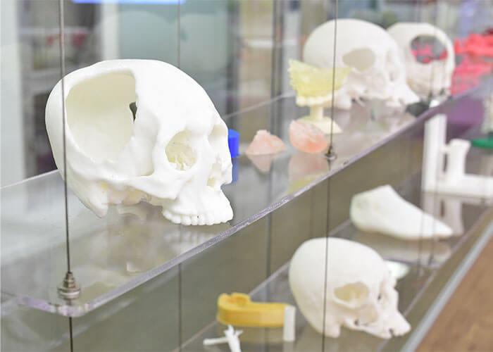 Schädel aus Kunststoff in Klinik