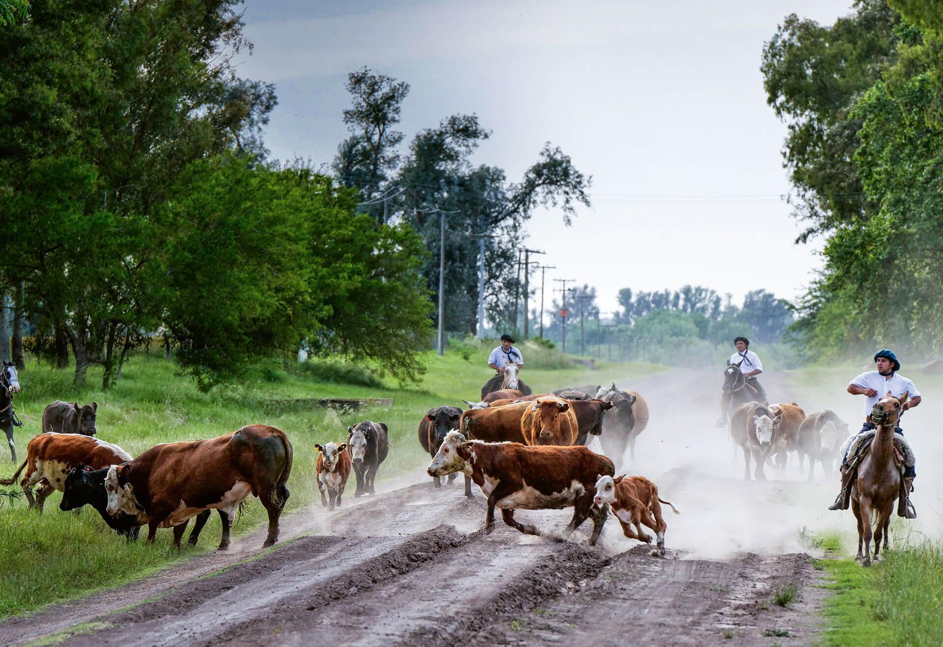 Rinderzucht Argentinien