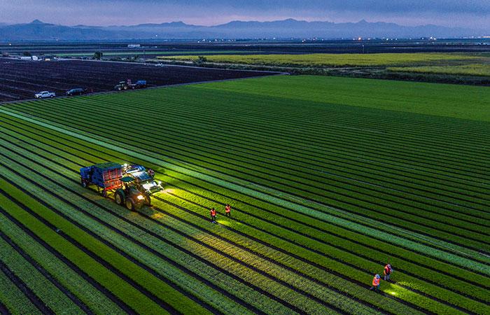 Salaternte auf kalifornischer Biofarm