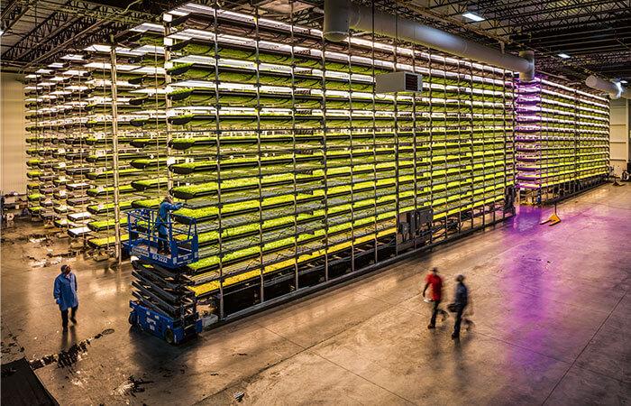 Gemüseanbau unter LED-Licht
