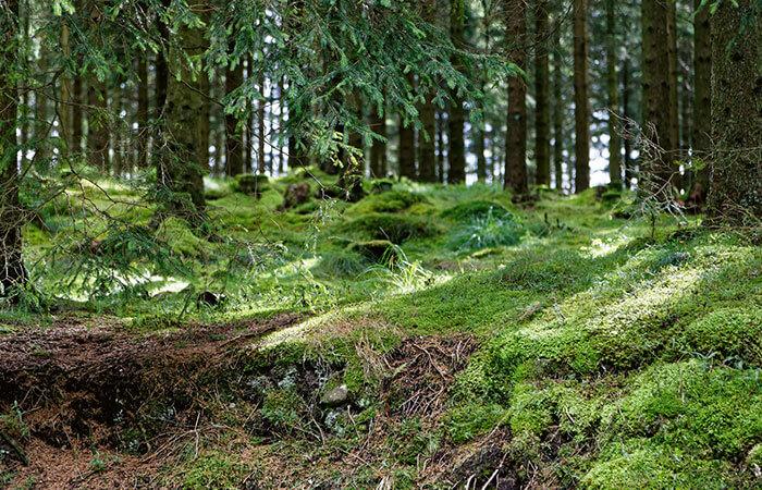 Skandinavischer Wald
