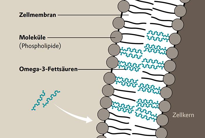 Wirkung von Omega-3-Fettsäuren Grafik